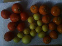 Citrus 2014 03 05