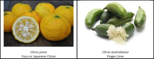 Unusual Citrus